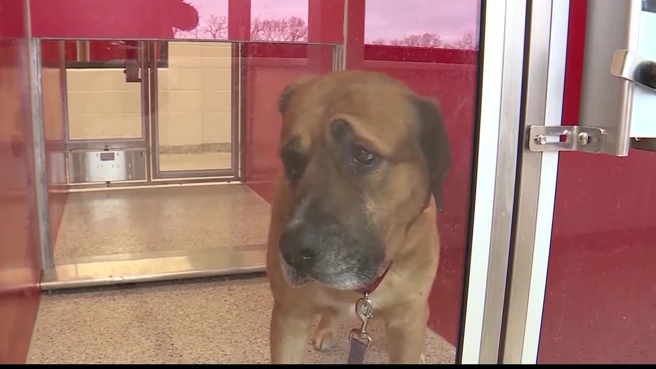 Kansas City, Missouri Animal Control now in hands of KC Pet Project