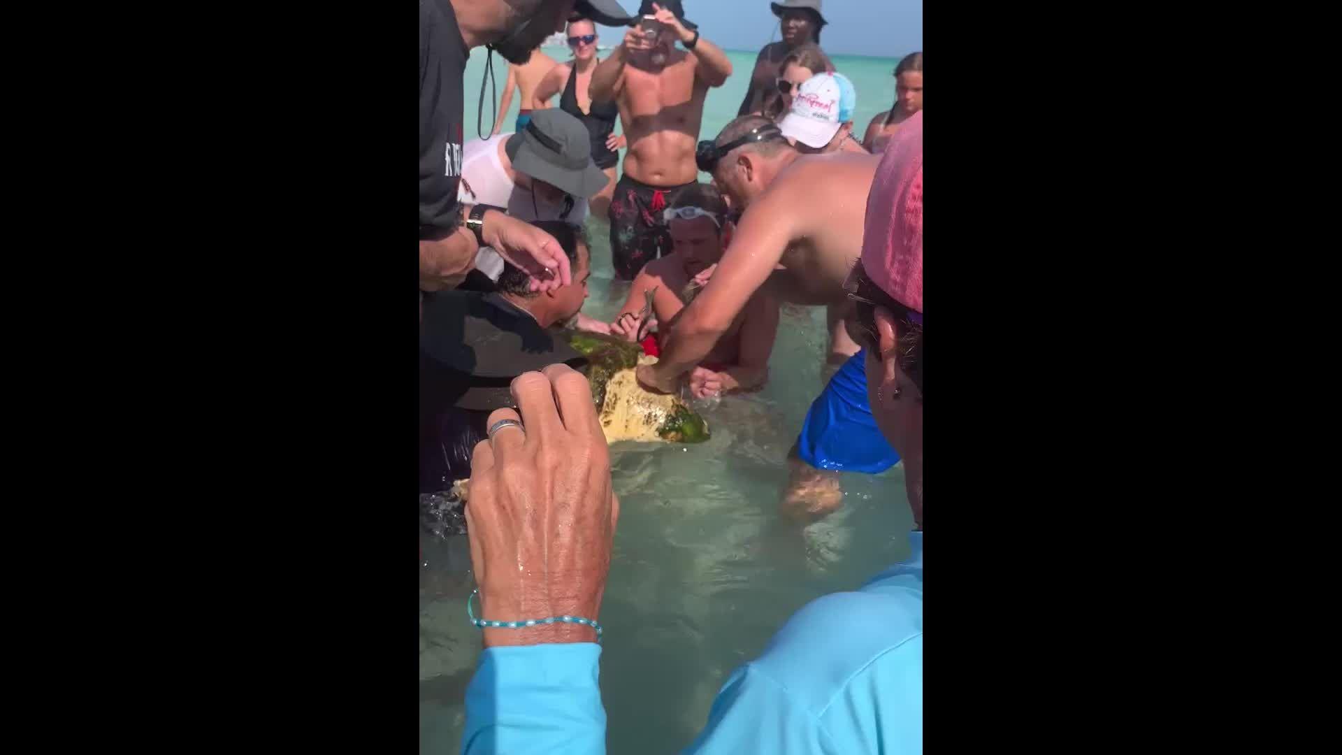 Florida lifeguard saves sea turtle tangled in entire fishing pole