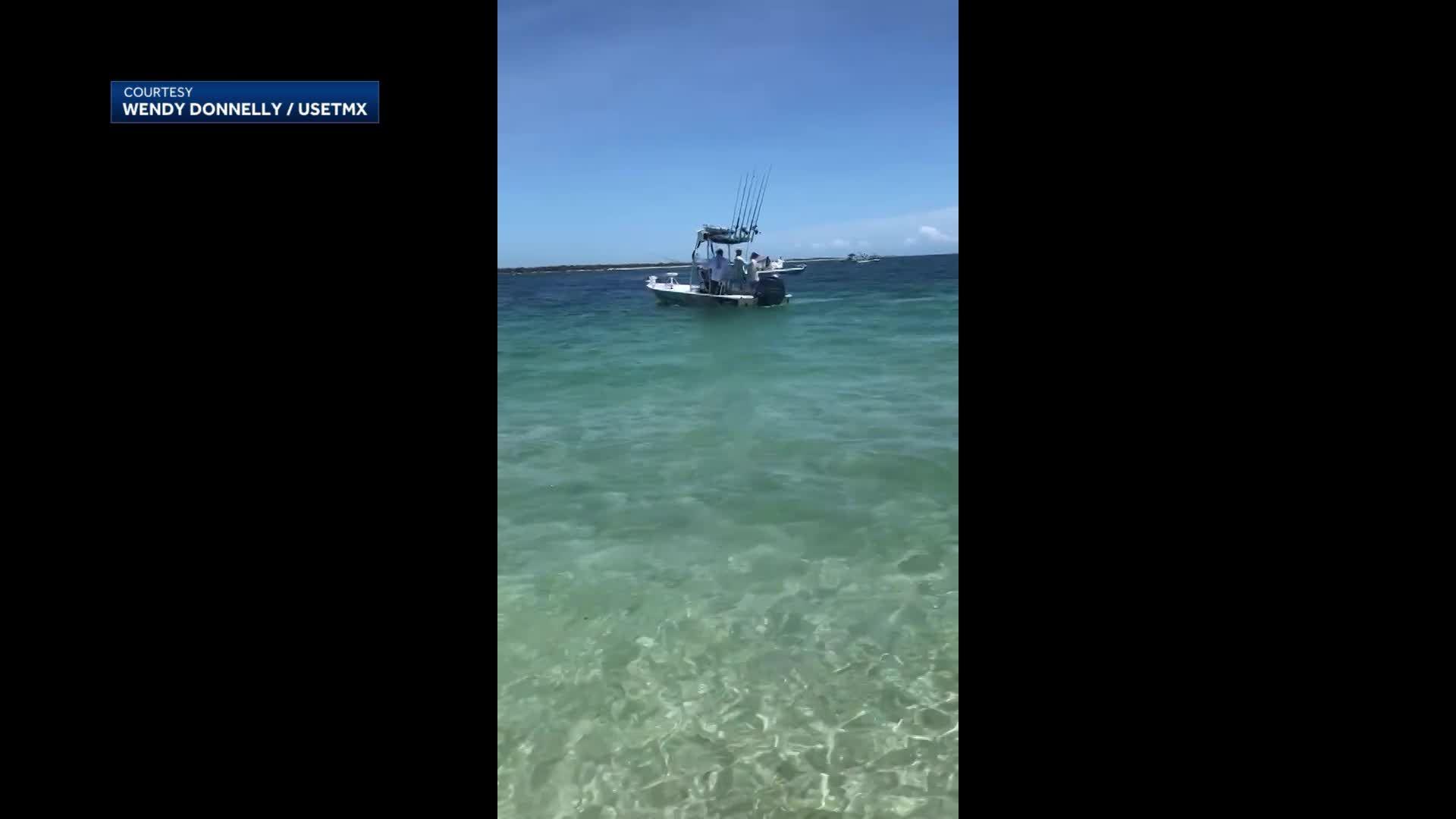 Hammerhead shark comes ashore Florida beach