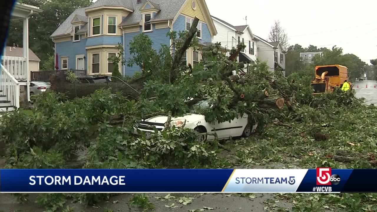 Massive tree crushes car, tears down wires
