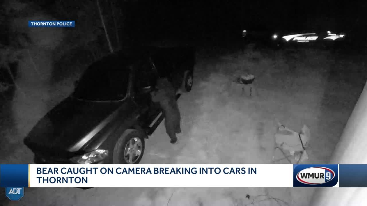 Bear caught on camera breaking into cars in Thornton