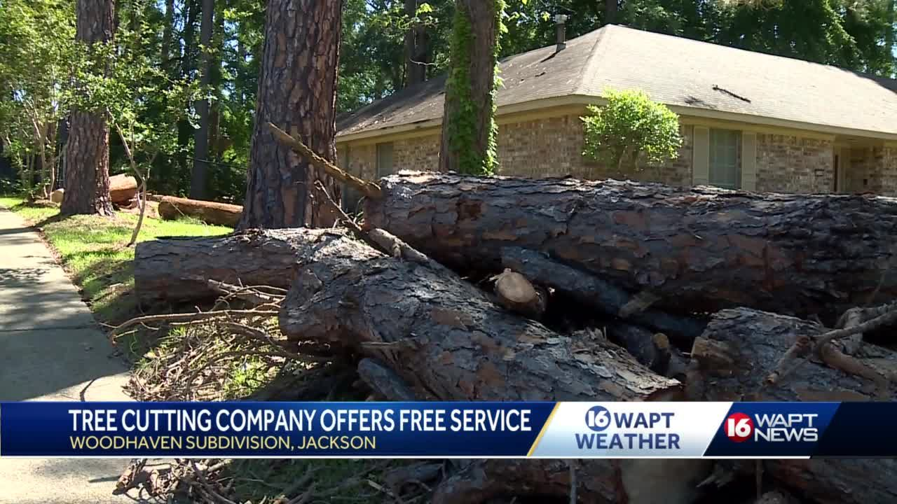 Tree cutting company offers free service