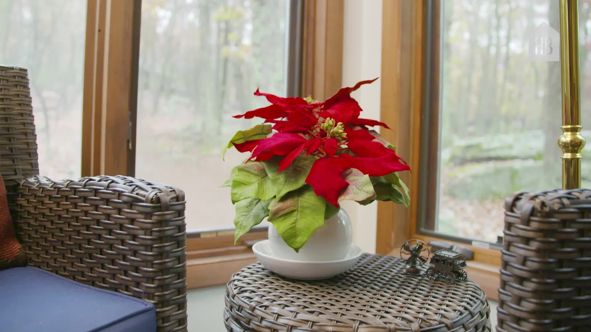 How To Take Care Of Poinsettias From Gardeners