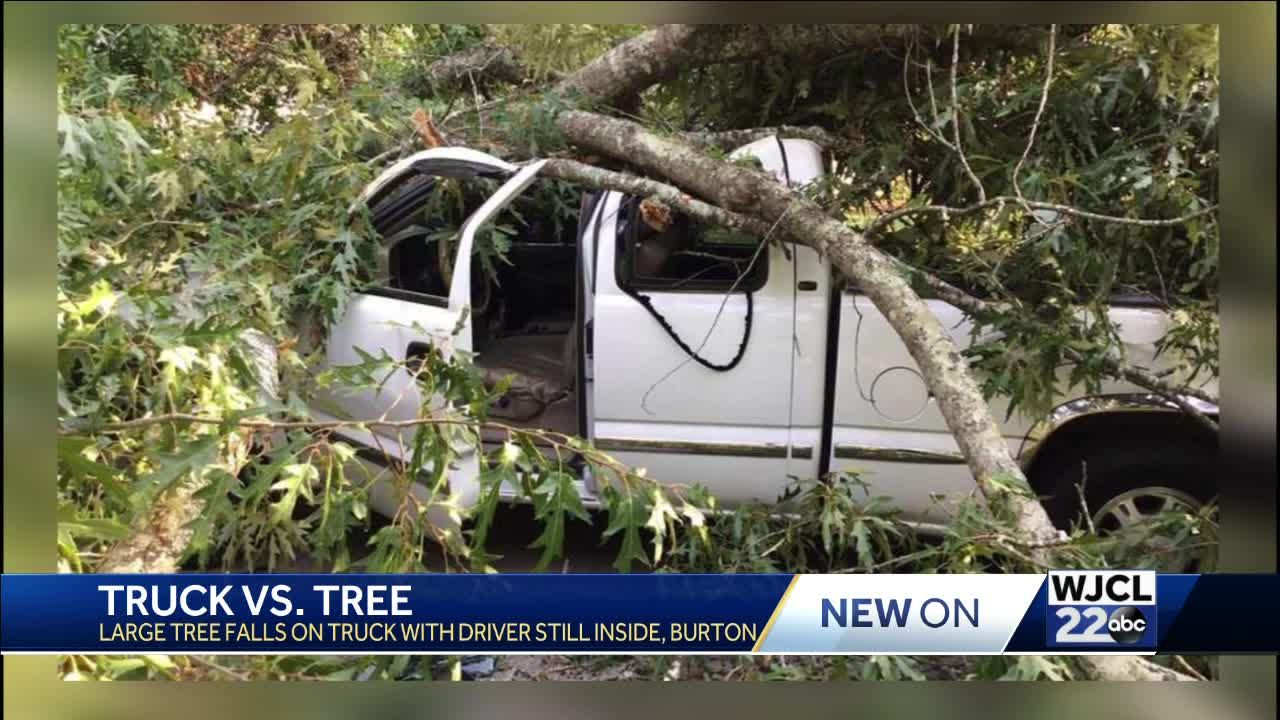 Tree falls on pickup truck in Burton, driver escapes with no injuries