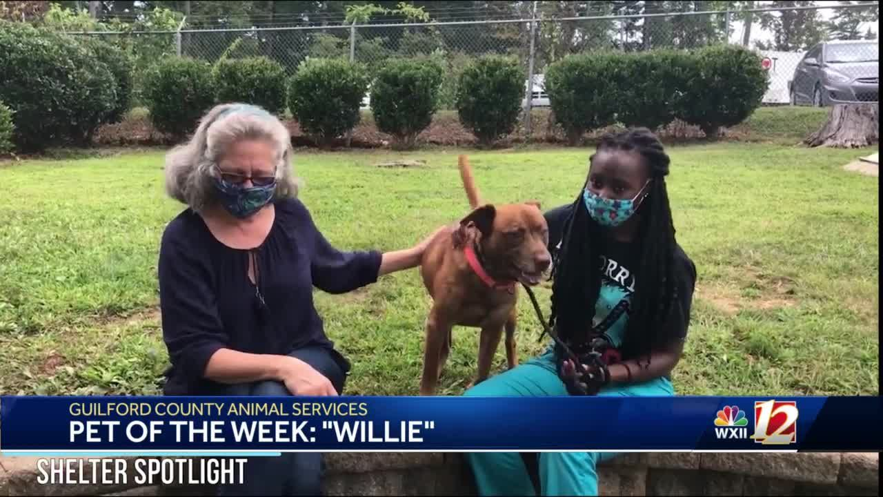Noon Pet Of The Week: Willie