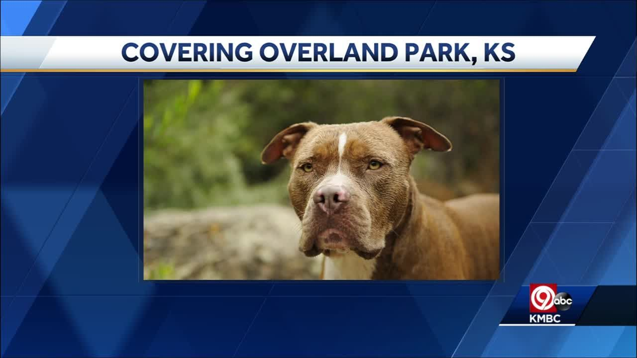 Overland Park city leaders researching changes to Pit Bull ban