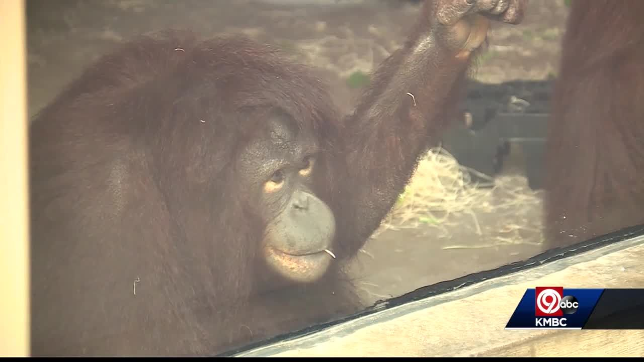 KC Zoo to begin vaccinating some animals against COVID-19