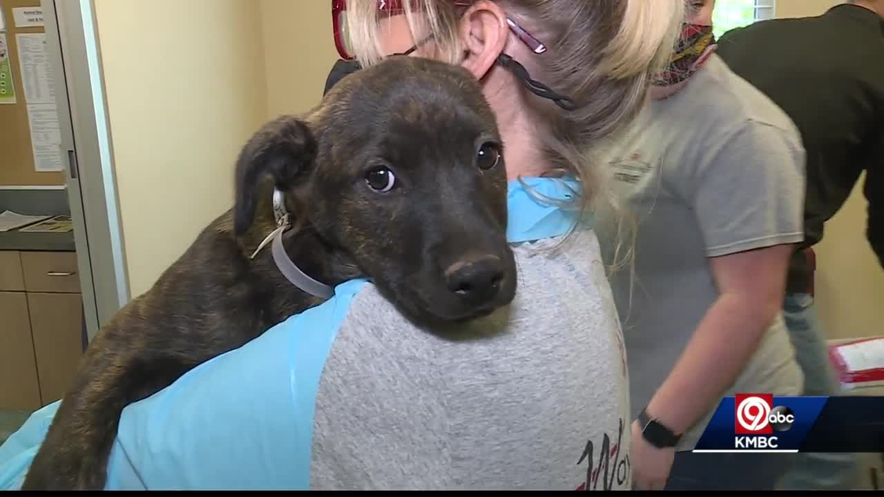 Wayside Waifs takes in 51 dogs from Alabama as part of emergency transfer