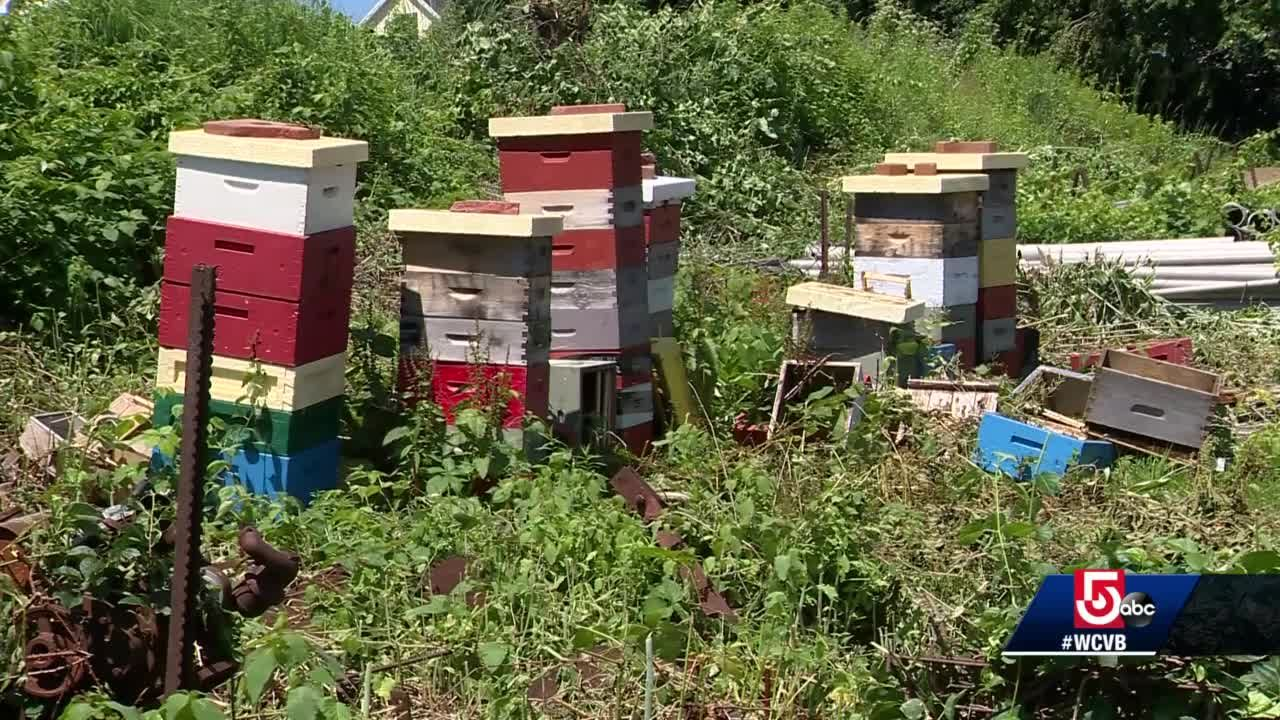 Bee hives travels to Massachusetts farms to help pollinate crops