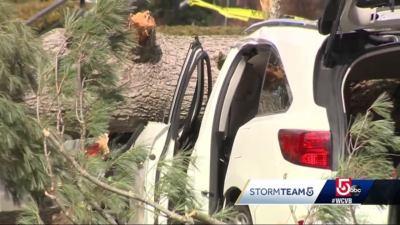 Tree falls on car pinning woman, child inside