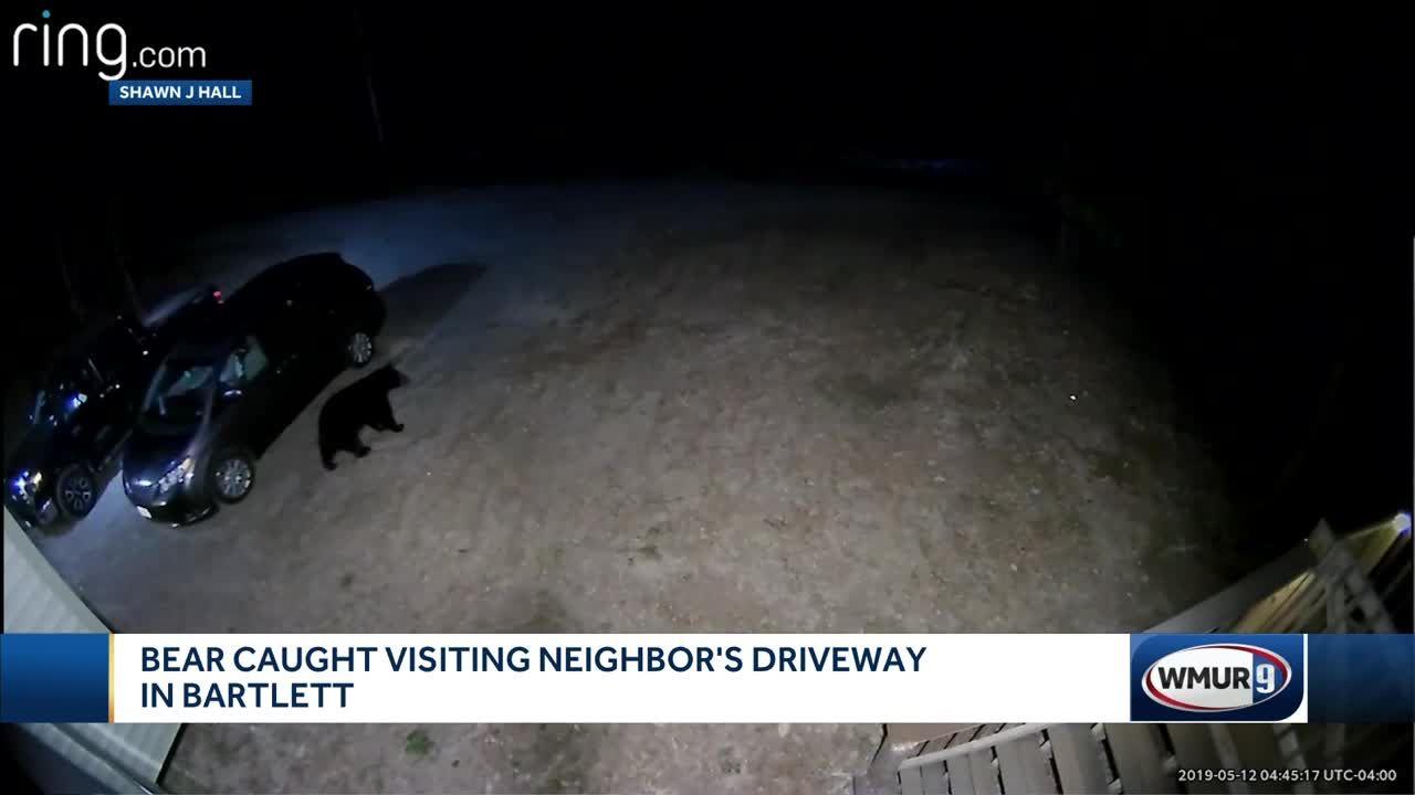Bear caught on camera exploring Bartlett driveway