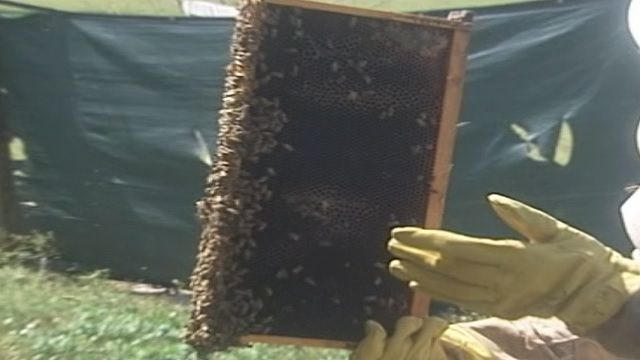 Business is buzzing at bee farms