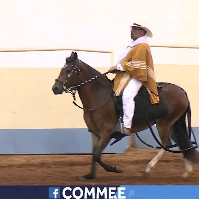 Oklahoma Fantastic Finds: North American Peruvian Horse Association National Show