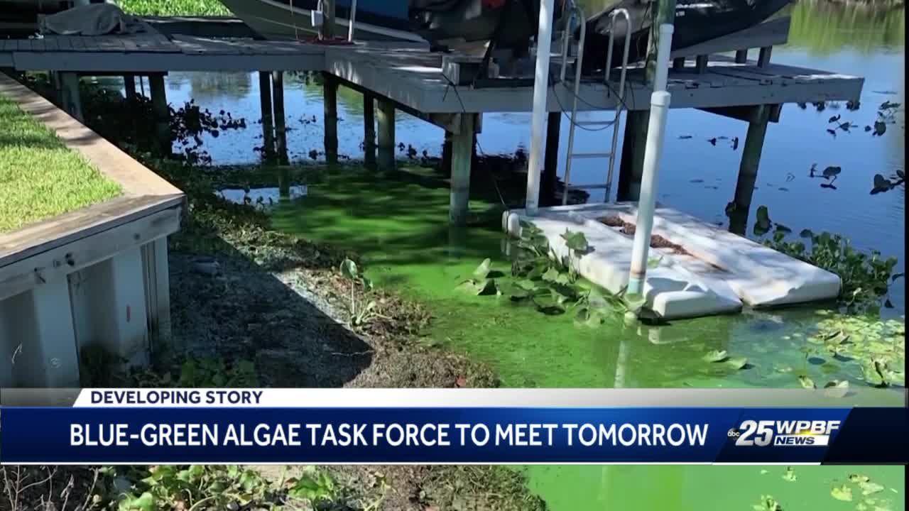 Blue-green algae task force to meet tomorrow