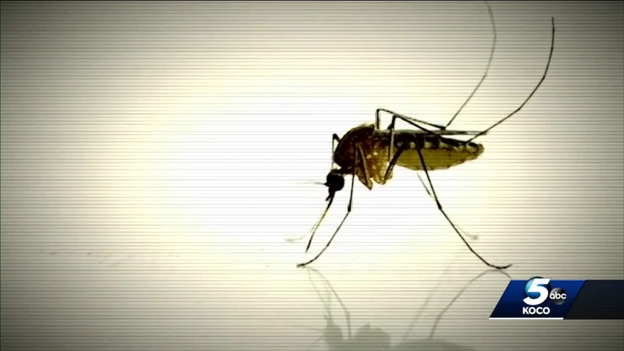 Epidemiologist looks at how to keep up with, stay safe during mosquito season in Oklahoma