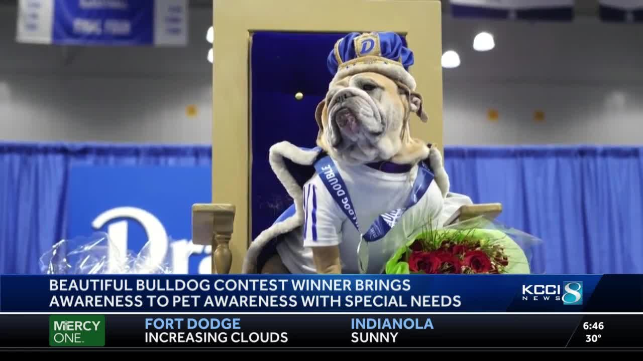 Drake's 'Most beautiful bulldog' brings awareness to pets with special needs