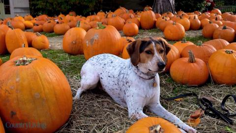 How to Keep Pumpkins From Rotting and Ruining Your Fall Front Porch Display