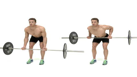 Image result for Underhand Grip Bent Row
