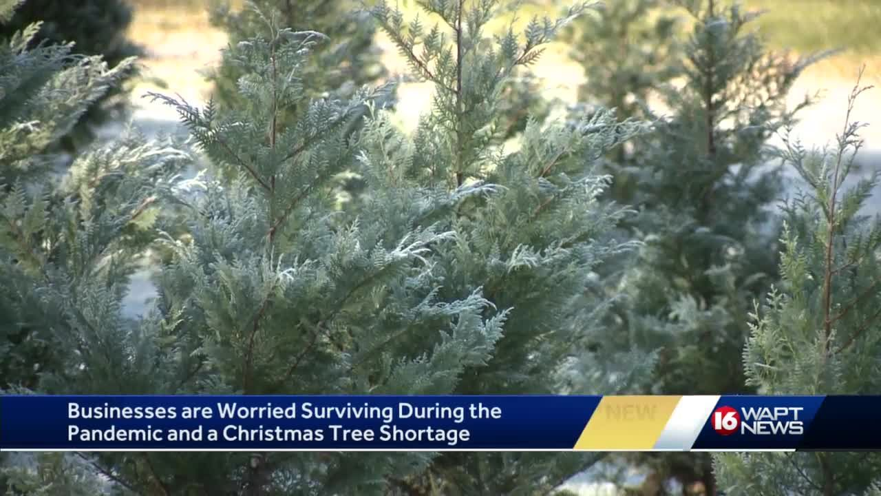 Christmas tree shortage puts bow on 2020