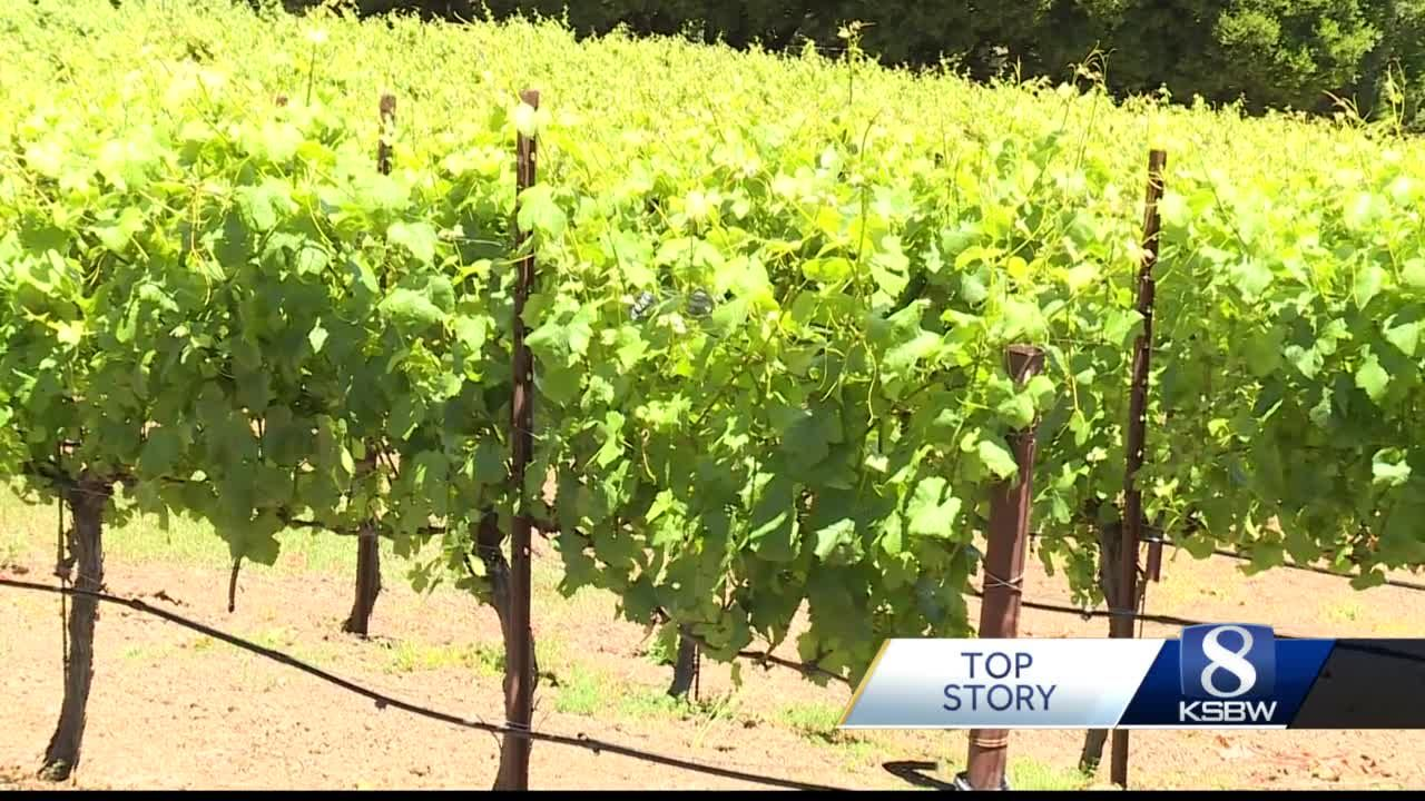 Drought Impact on local wineries