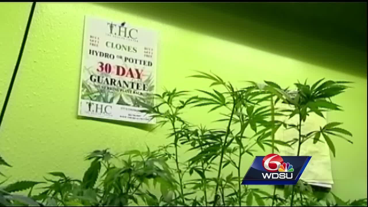 Have you seen the billboards? 'Weedmaps' advertise marijuana-based services  in NOLA