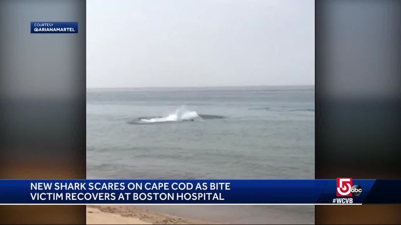 Video captures shark attacking seal feet away from Cape Cod beach