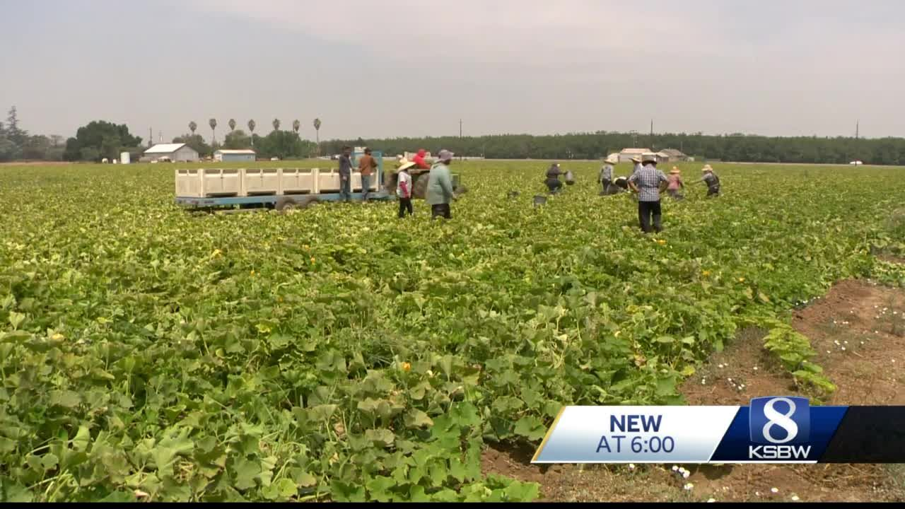 CDC: Farmworkers die 20 times more than other workers from extreme heat