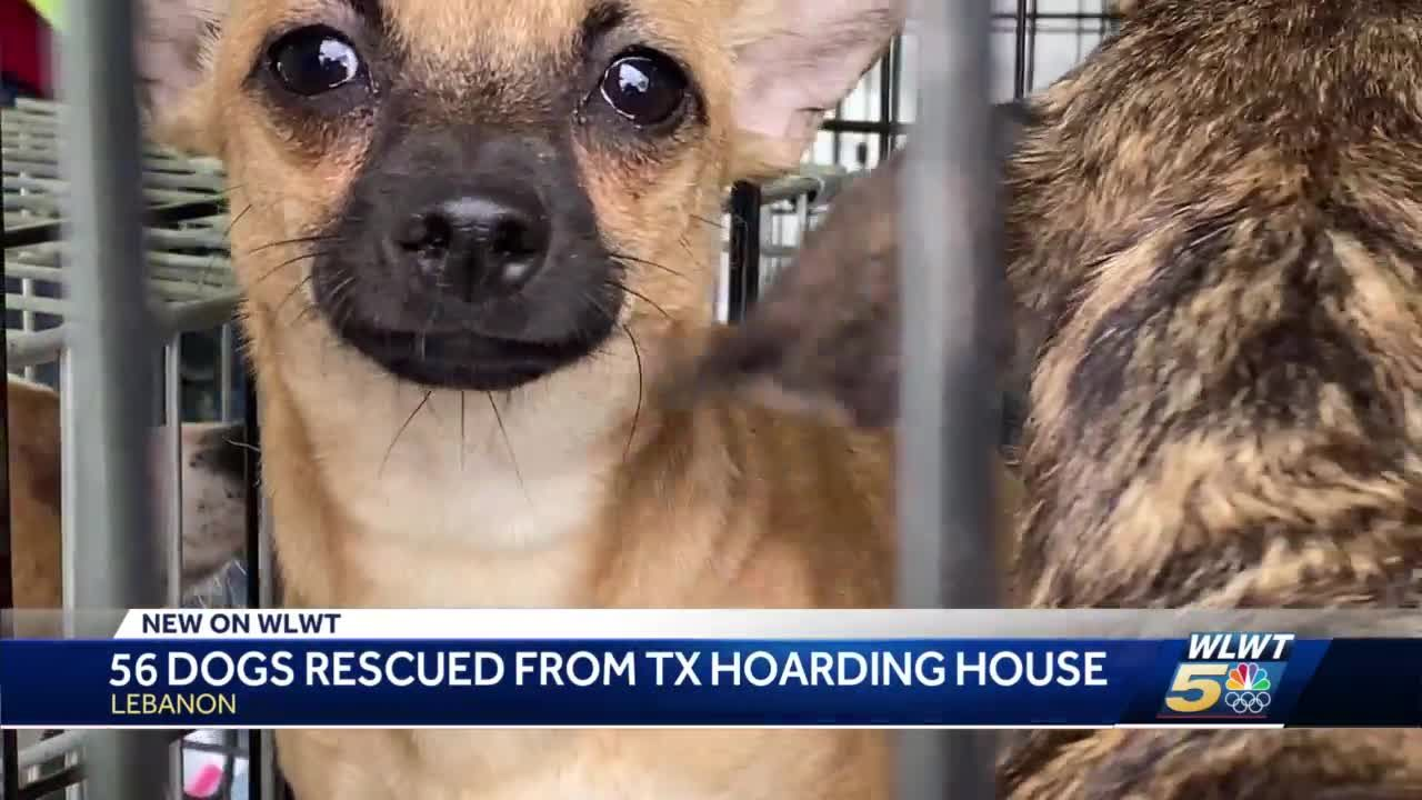 56 dogs rescued in Texas now being cared for in Warren County