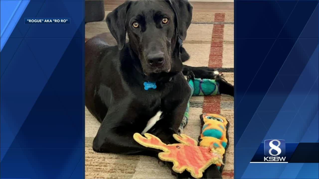 Meet our KSBW Viewer Pet, Rogue!
