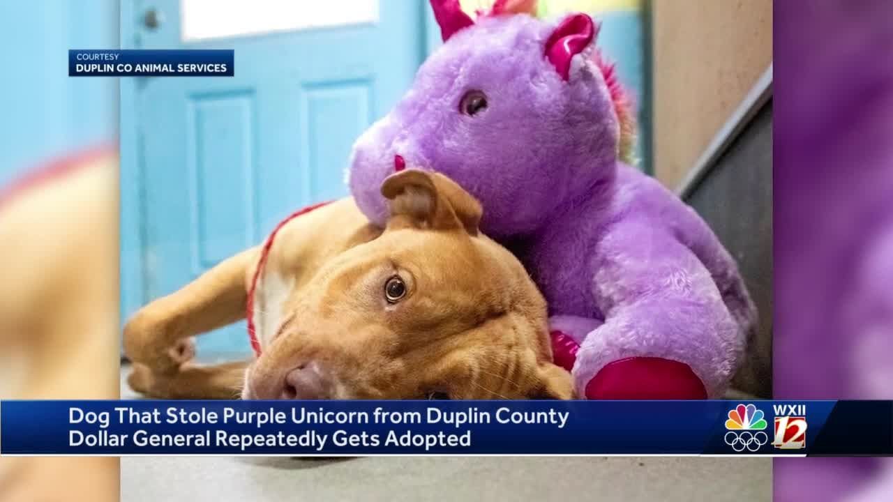 North Carolina dog in shelter after attempting to shoplift stuffed animal unicorn adopted
