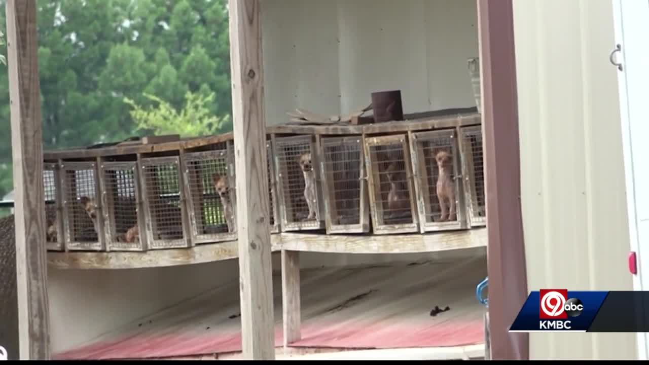 Humane Society says Missouri ranks No. 1 on 'Horrible Hundred' list of puppy mills
