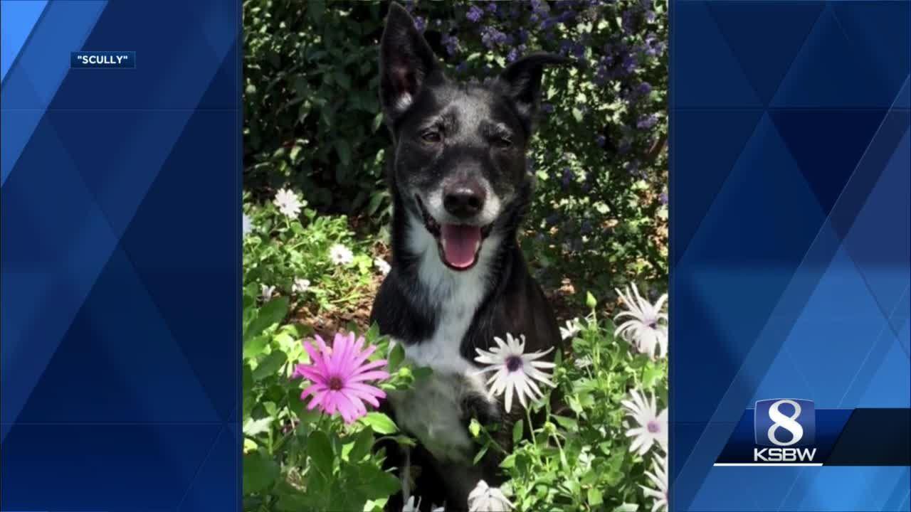 Meet our KSBW Viewer Pet, Scully Bolen!