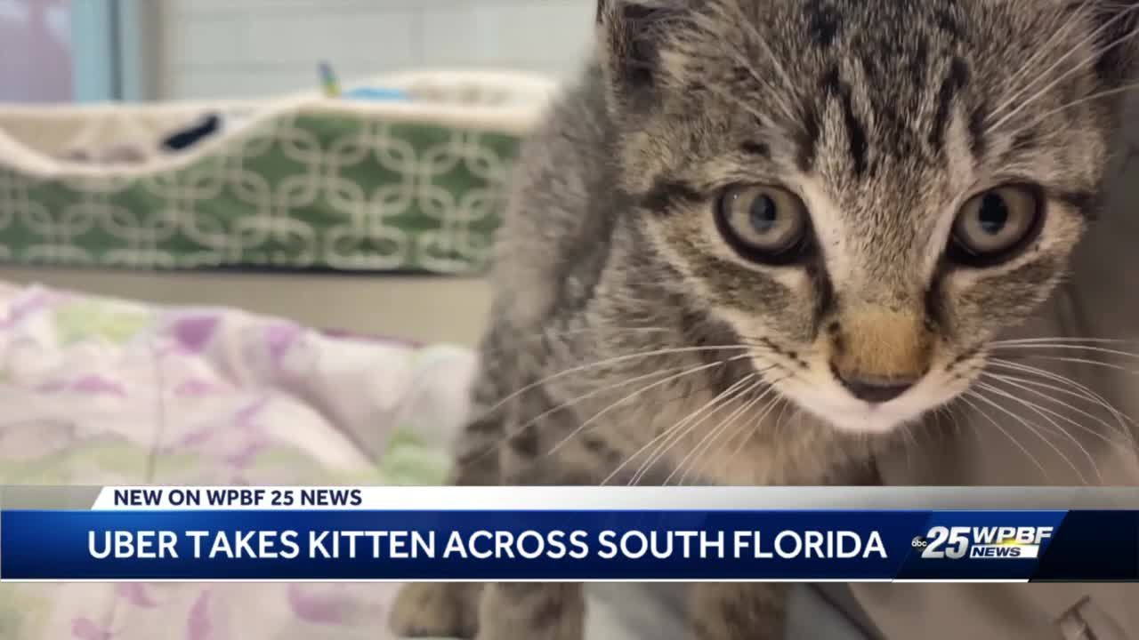 WPBF 25 News - cover