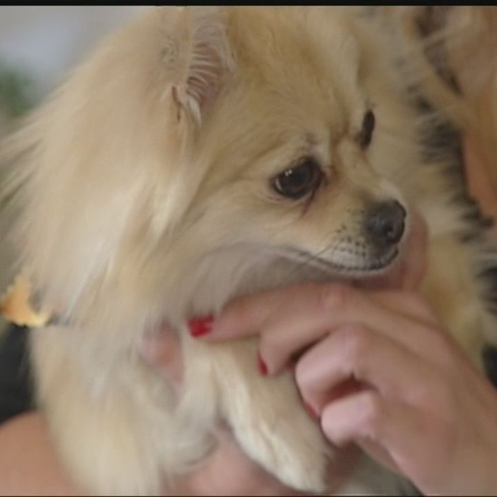 Oklahoma woman finds stolen dog for sale on Craigslist