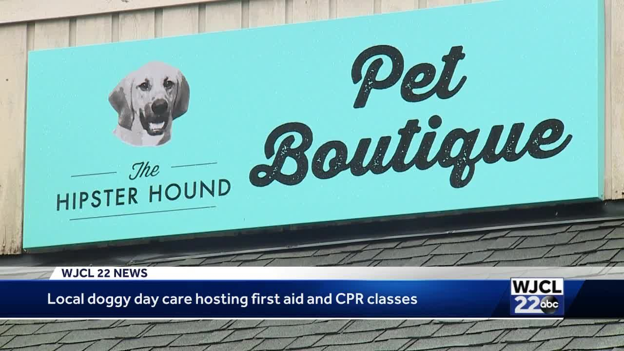 Cpr For Your Pet Hipster Hound Shows You How