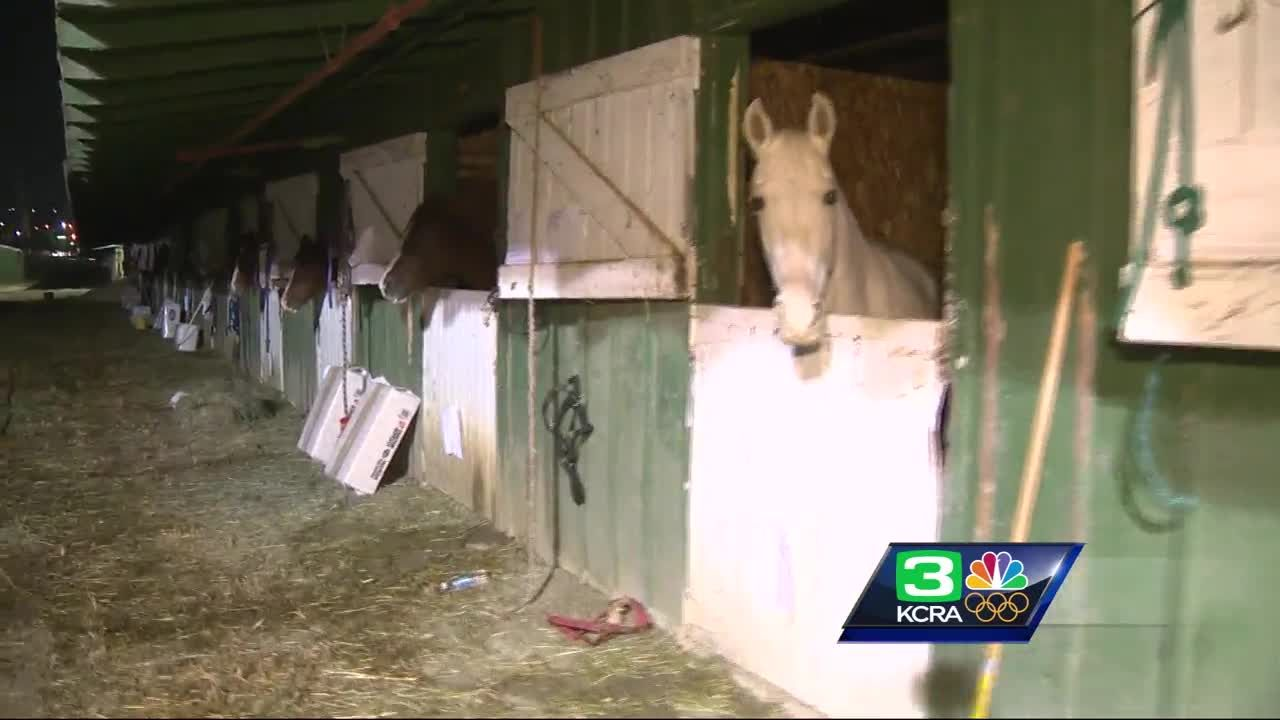 Volunteers care for scared farm animals escaping Atlas Fire