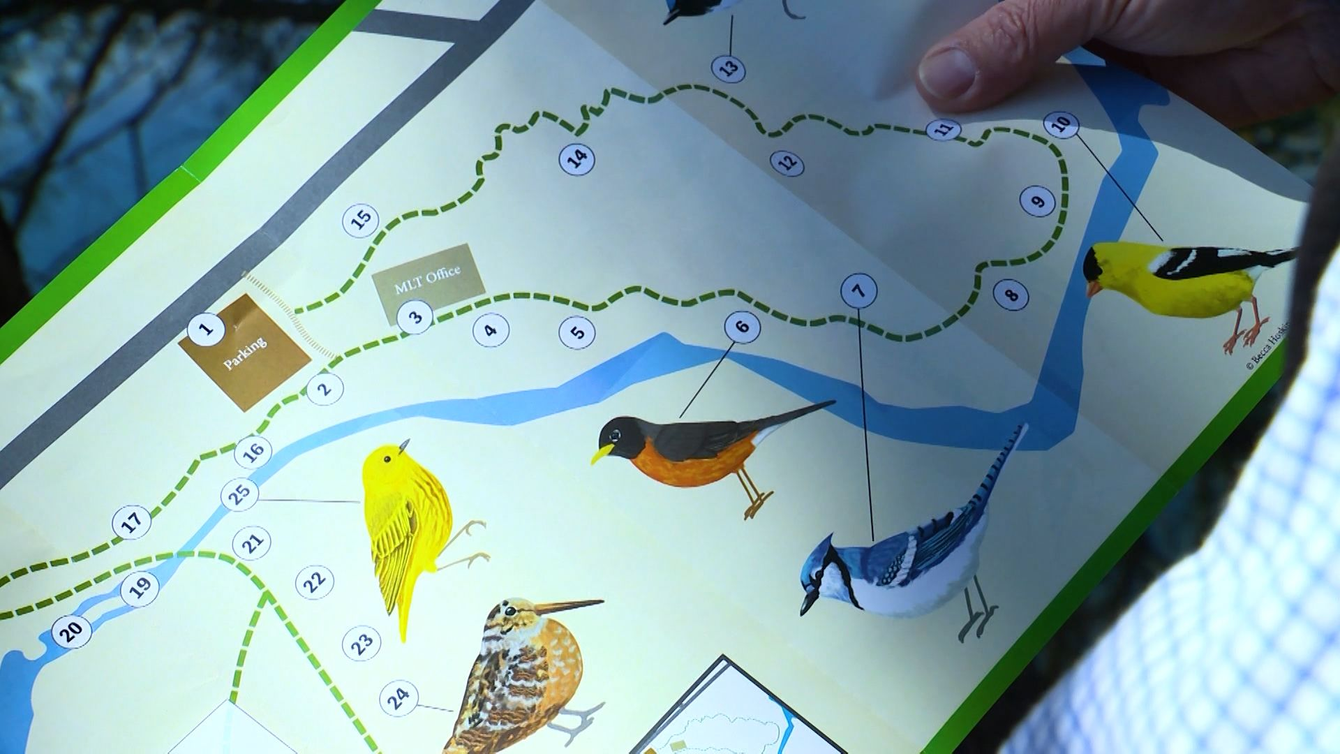 Unique trail in western Maine uses art to make bird watching easier