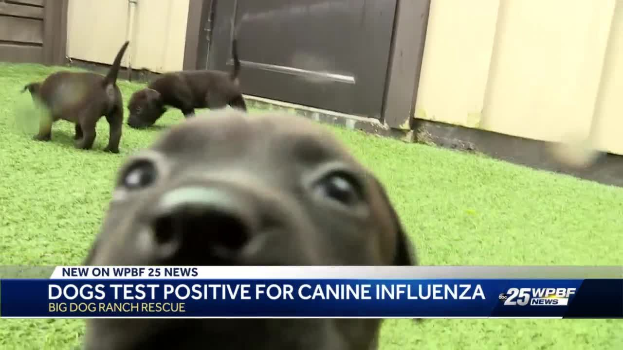 Dogs test positive for canine influenza