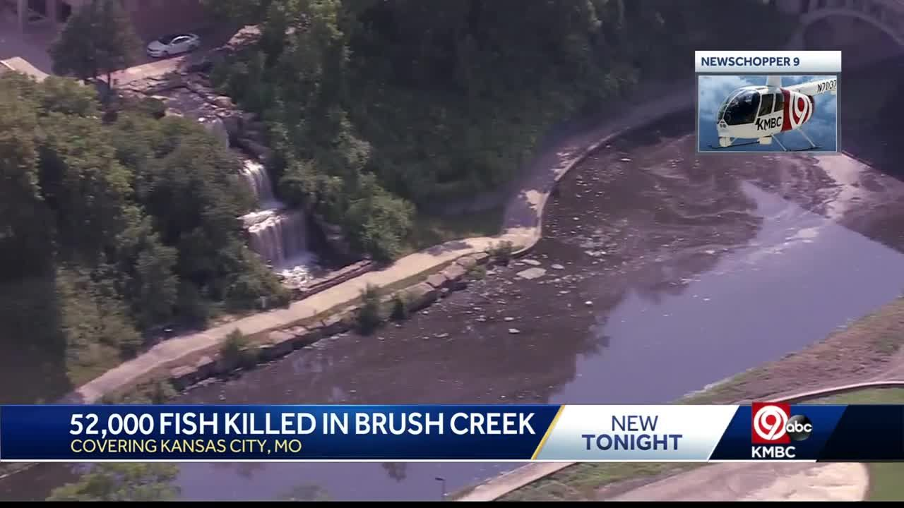 State officials monitoring Kansas City's Brush Creek after 52,000 fish die