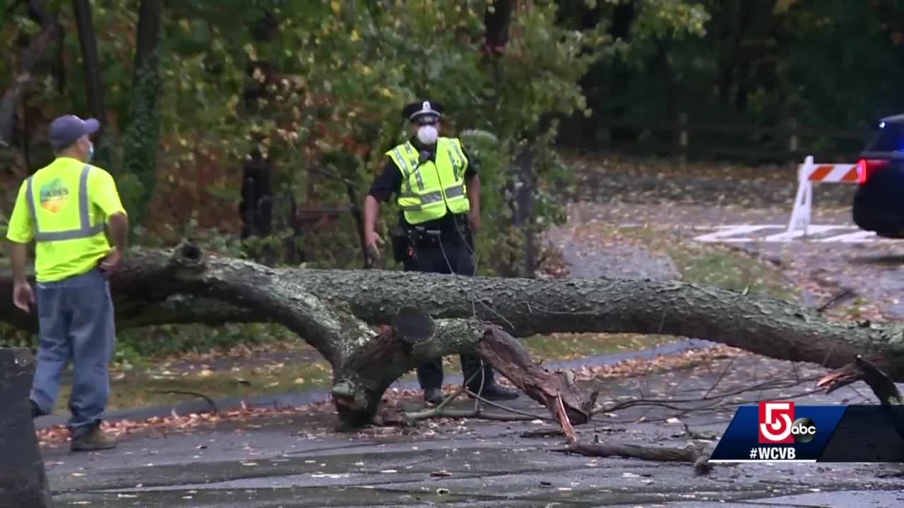 Cleanup under way after storm downs trees, power lines