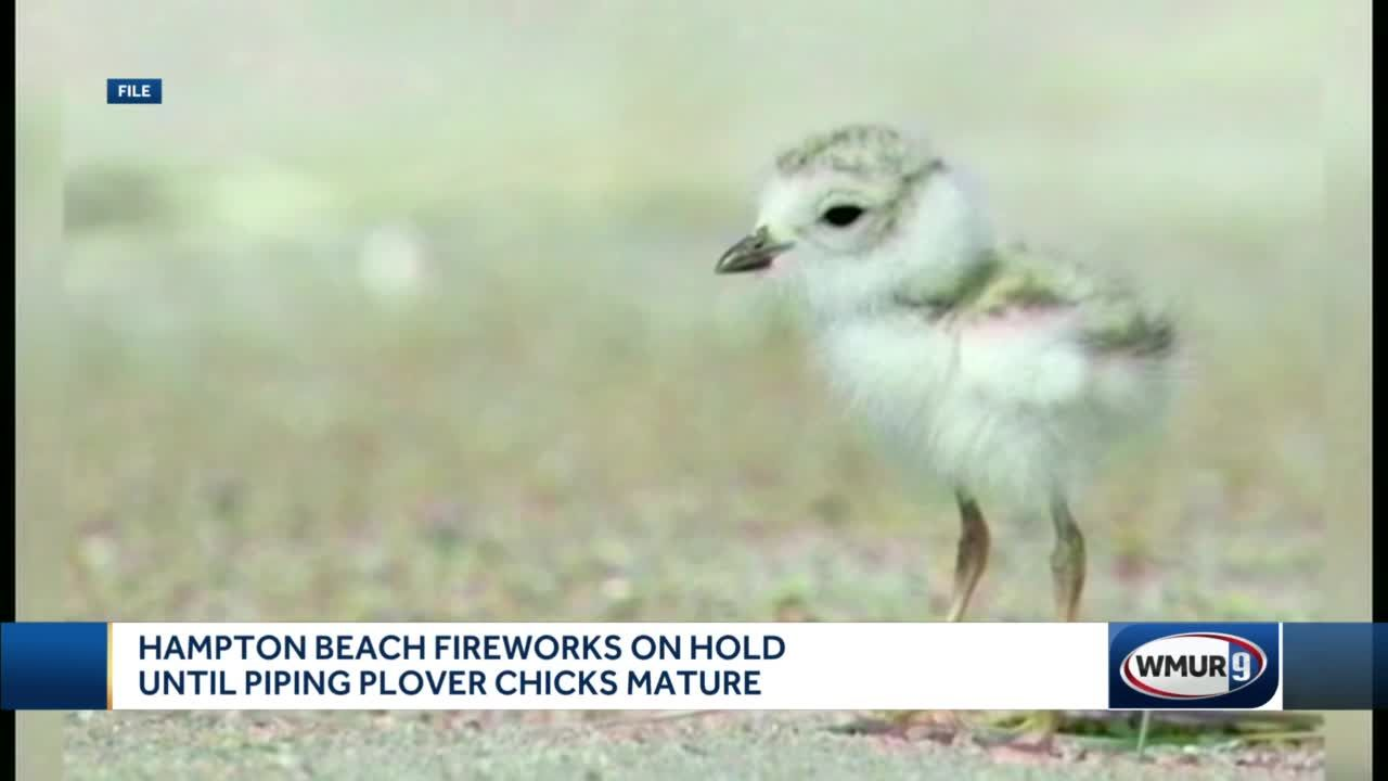 Hampton Beach fireworks on hold until piping plover chicks mature