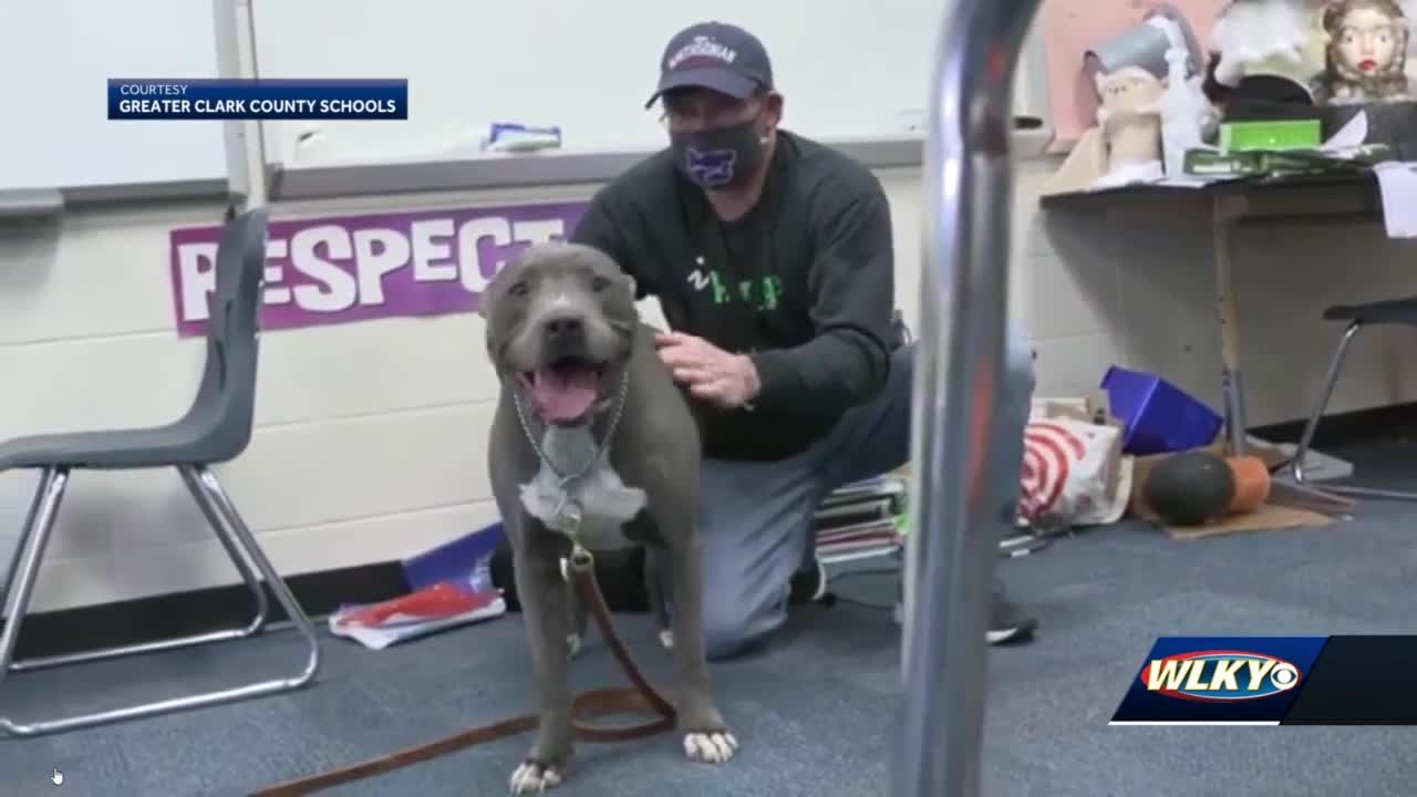 New Washington Middle/High School to introduce therapy dogs next school year