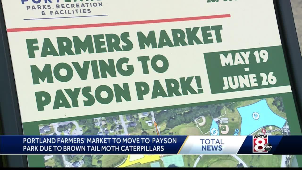 Brown tail moth caterpillars force Portland farmers market from Deering Oaks