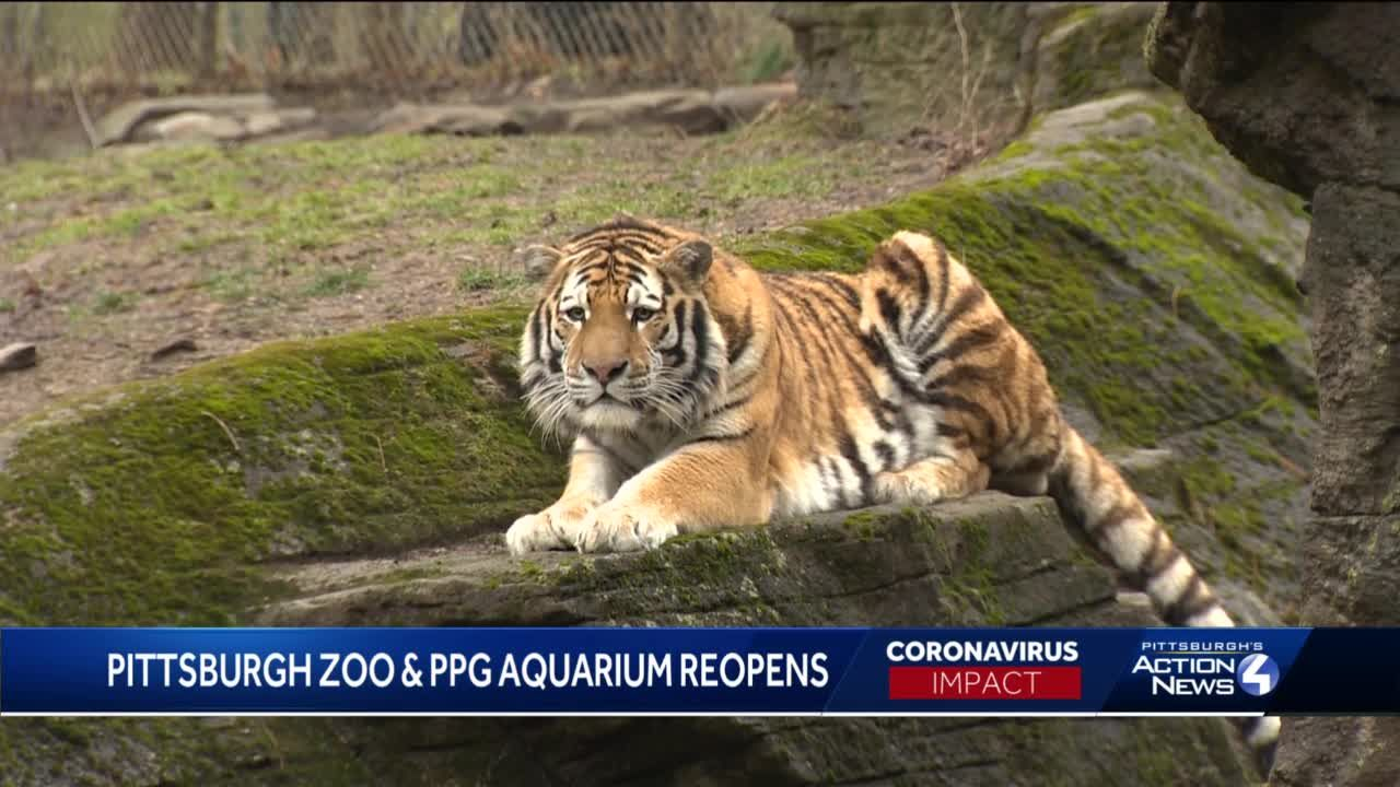 Pittsburgh Zoo reopens