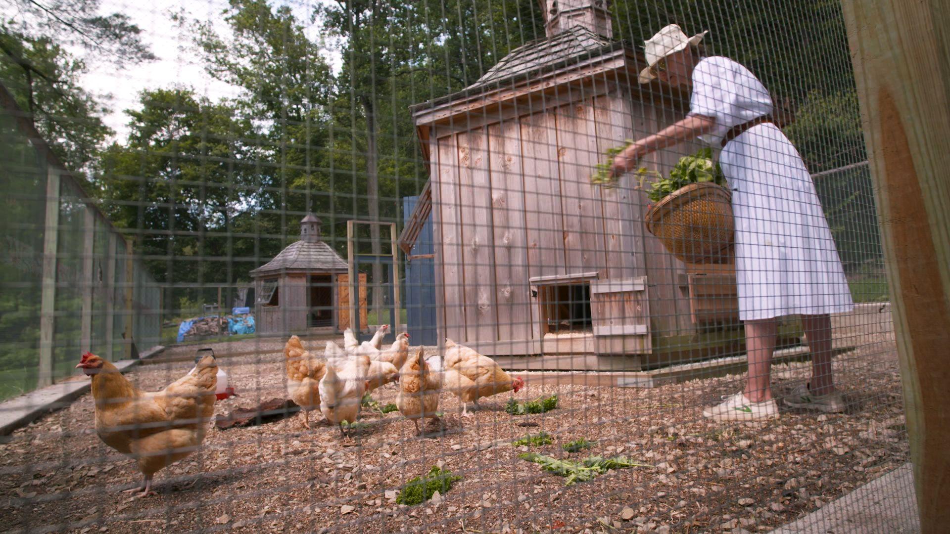 How to Raise Chickens in Your Backyard - Designer Chicken Coop