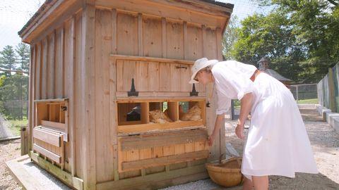 How To Raise Chickens In Your Backyard Designer Chicken Coop