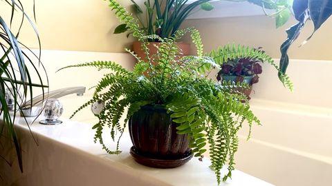 Planten In De Badkamer Deze Soorten Zijn Er Geschikt Voor