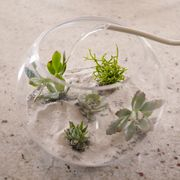 terrario con plantas