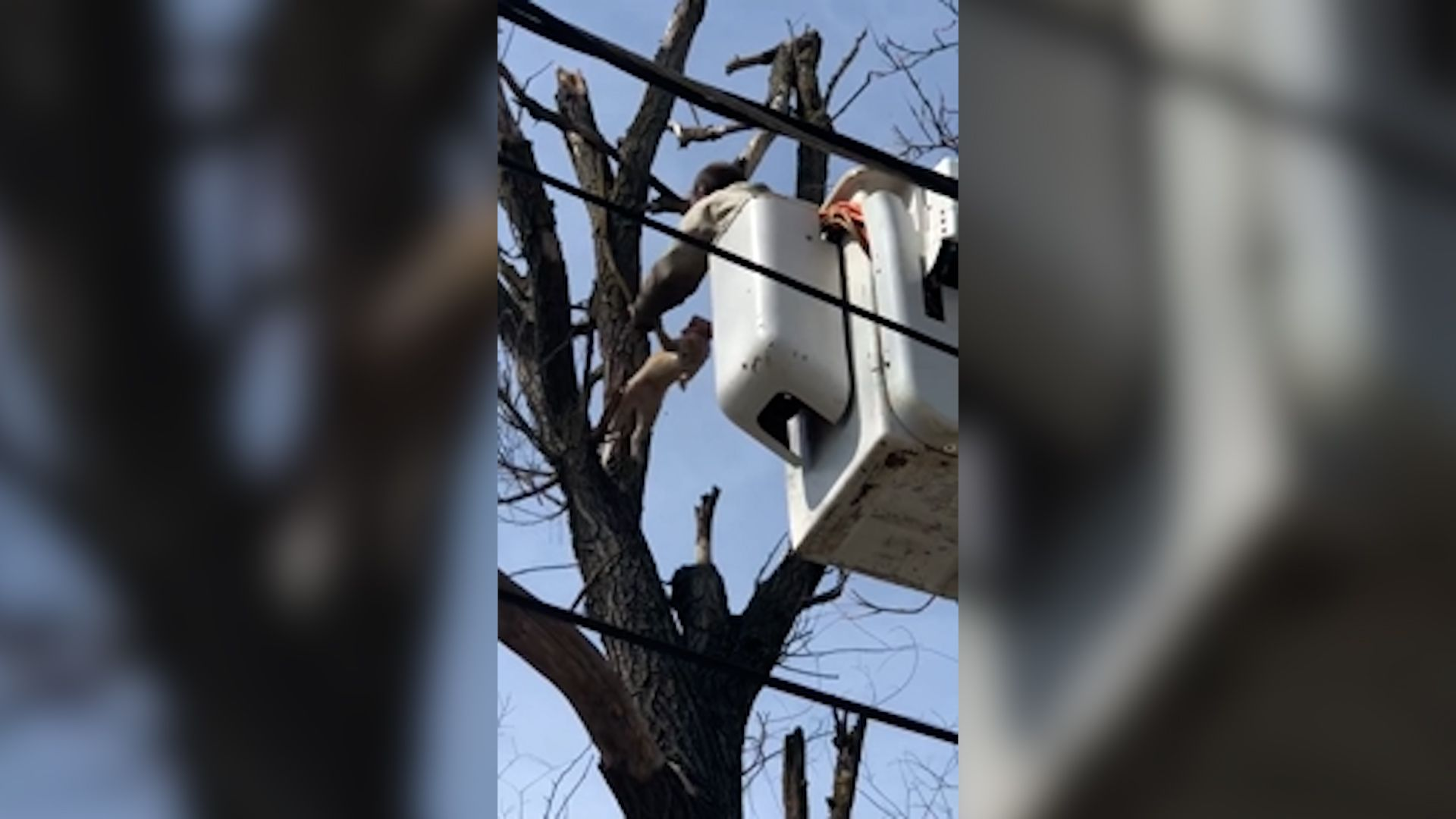Cat stuck in tree safe and sound after cherry picker rescue