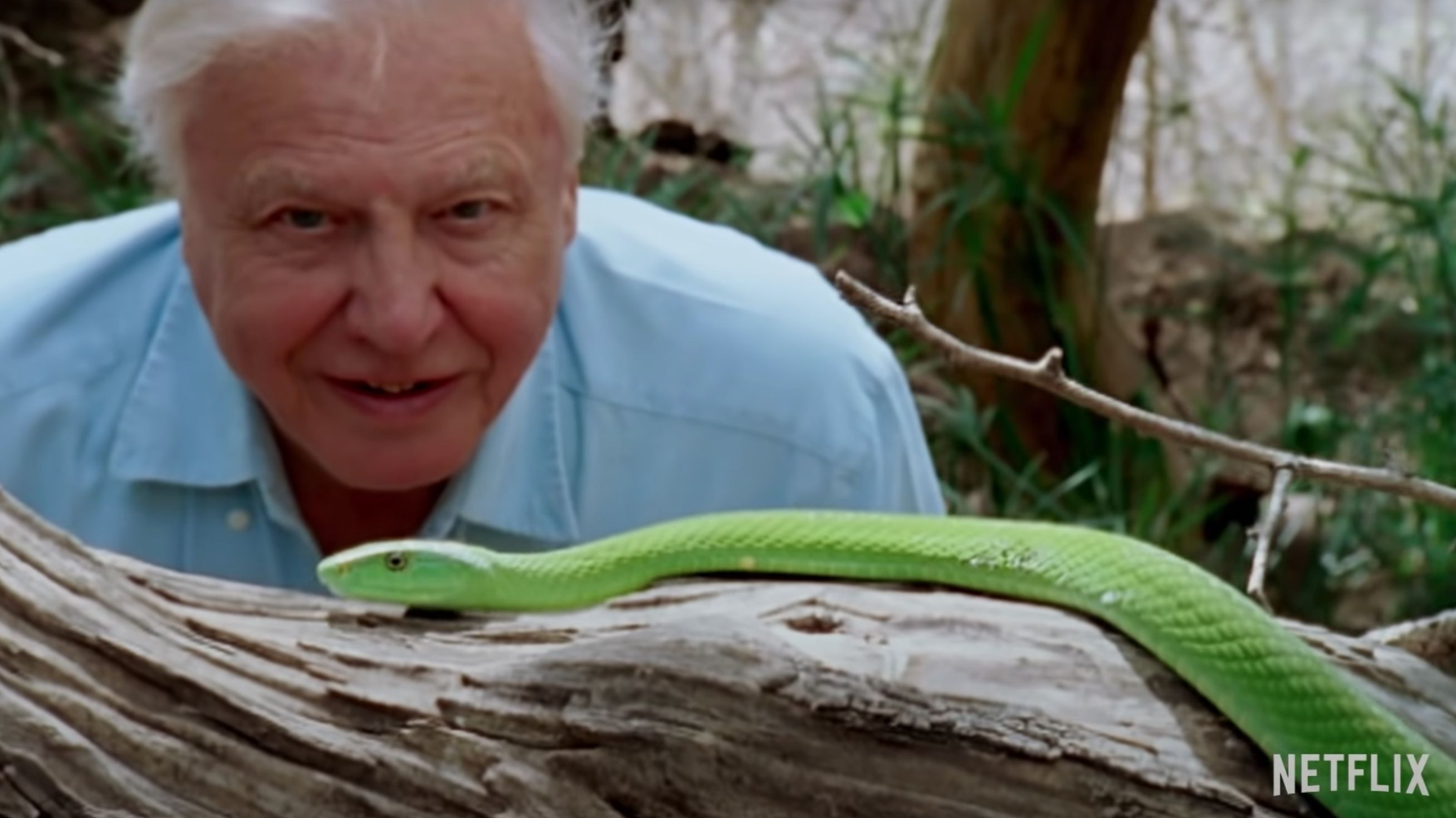 Netflix releases trailer for new David Attenborough documentary